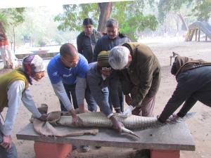 Patna Sex