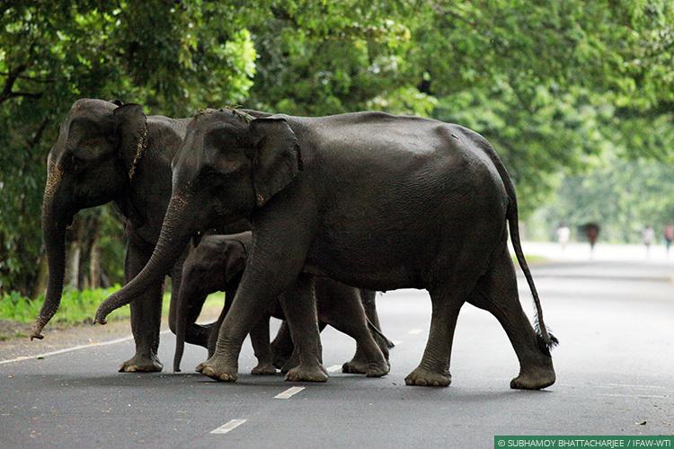 Image result for elephant corridor