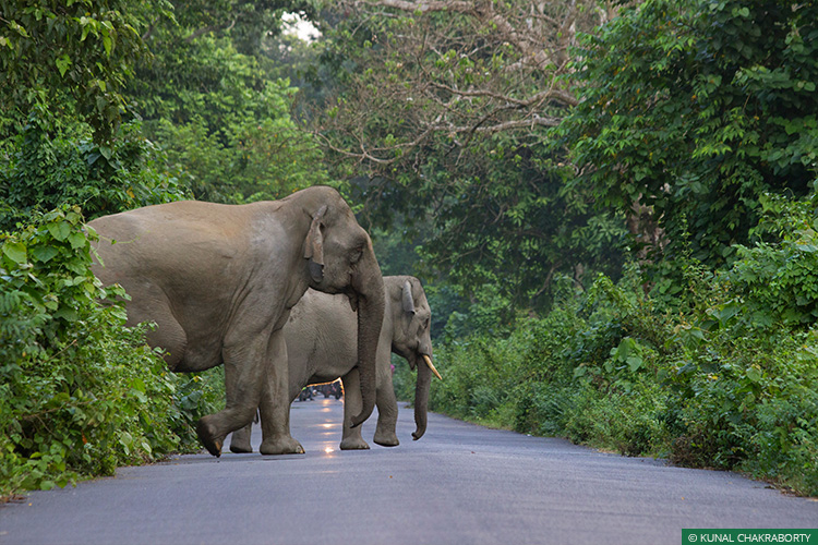 Right Of Passage, Gaj Yatra, 101 Corridors, Elephant Corridors, Elephants, Asian Elephant