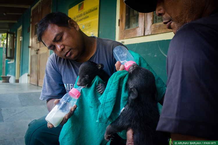 Assam, CWRC, Karbi Anglong, Asiatic Black Bear, Bear Cubs, Wild Rescue and Rehabilitation
