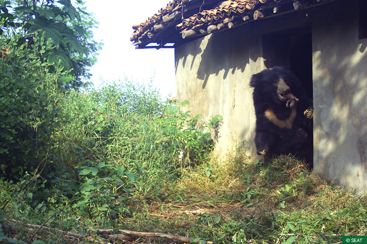 Maharashtra, Rapid Response Teams, Vidarbha Tiger Project, Conflict Mitigation, Sloth Bears