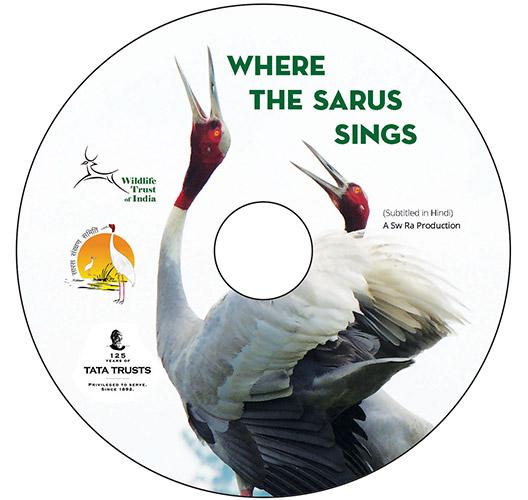 Sarus Crane, Sarus Crane Conservation Project, Wetlands, Uttar Pradesh
