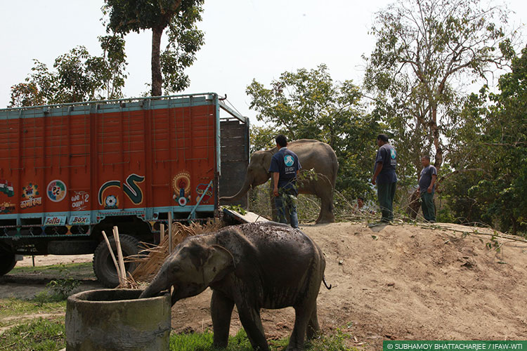 Assam, CWRC, Elephants, Asian Elephants, WIld Rescue and Rehabilitation, Translocation, Manas National Park, Kaziranga