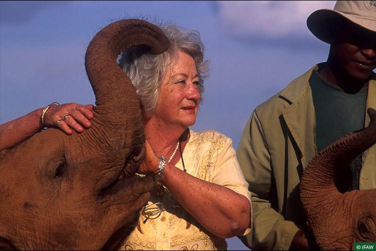 In Memoriam, David Sheldrick Wildlife Trust, Elephants, CWRC, Back to the Wild, Rehabilitation, Elephant Calf