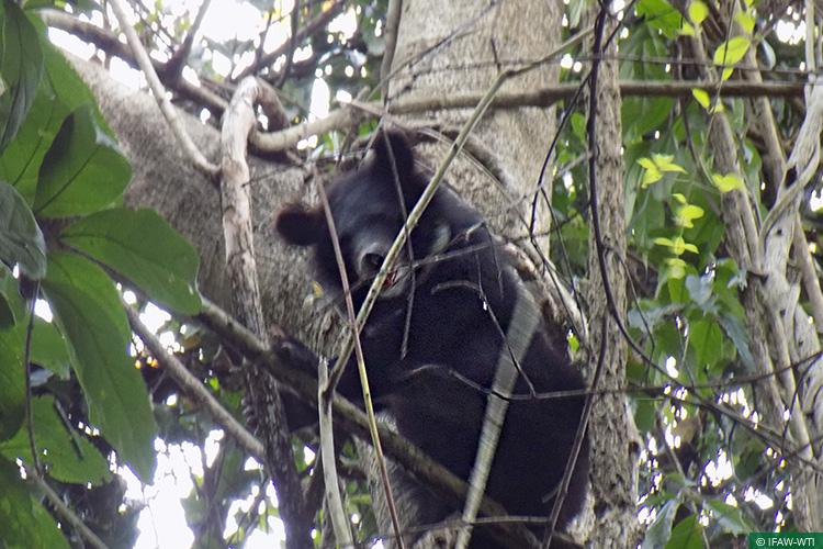 Arunachal Pradesh, Asiatic Black Bear, Bear Cubs, Bear Rehabilitation, CBRC, Centre for Bear Rehabilitation and Conservation, Pakke Tiger Reserve, Wild Rescue & Rehabilitation